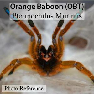 OBT slings for Sale in CTY OF CMMRCE, CA