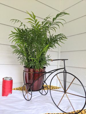 Parlor Palm Plants in Tricycle Metal Planter Pot- Real Indoor House Plant for Sale in Auburn, WA