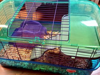 Guinea Pig Cage with House for Sale in Everett,  WA