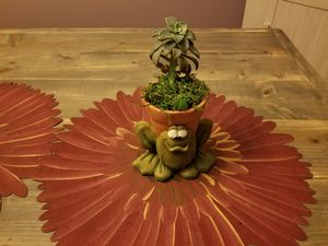Succulent for Sale in Ashville, OH