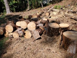 Free wood. Great for camping for Sale in Lawrenceville, GA