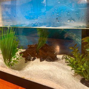 40 Gallon Fish Tank With Rare Fish for Sale in San Jose, CA