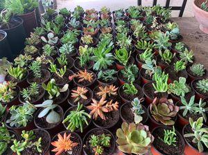 Succulent plants for Sale in Riverside, CA