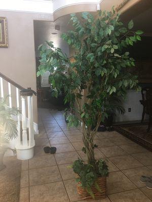 Artificial plants for Sale in Corona, CA