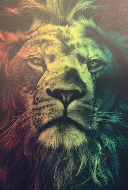 Rasta Lion canvas With or without frame and backing for Sale in Berea,  OH