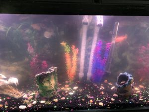 55gallon tank plus stand with excess pries for Sale in Delaware, OH