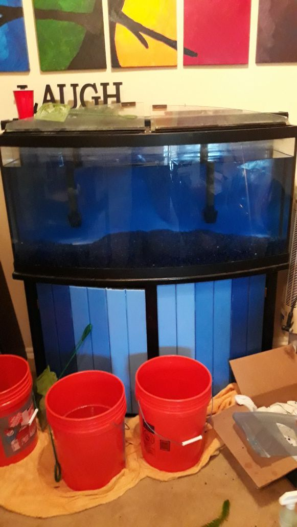 72 gallon Bow Front Aquarium and everything you need.
