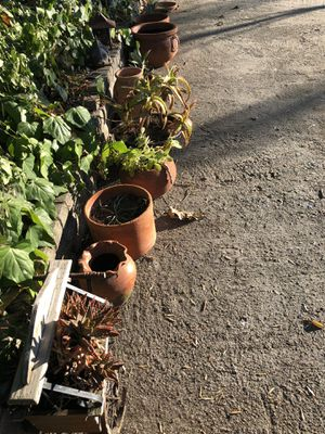 Succulents and clay pots for Sale in San Marcos, CA