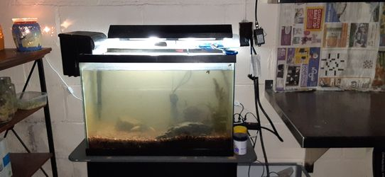 Aquarium Tanks Need Gone for Sale in Franklin,  IN