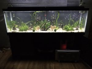 125 gallon fish tank full setup for Sale in Cleveland, OH