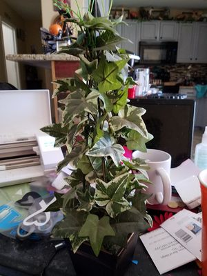 12 inch topiary for Sale in Buckeye, AZ