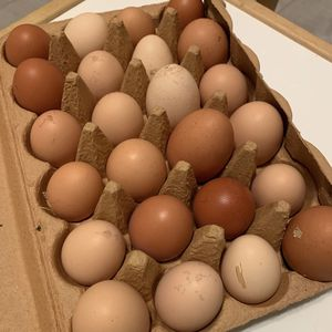 Chicken Eggs for Sale in Vancouver, WA