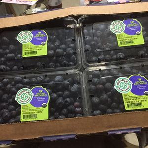 Fresh And Organic Blueberry Box Full Box For $20 for Sale in Hollywood, FL