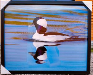 """IKEA RIBBA SERIES BLACK: FRAMED DUCK PRINT """"24×35(3/4)"""" INCH• PHOTOGRAPHY NATURE ANIMAL PRINT • HOME DECOR & INTERIOR DESIGN for Sale in Fort Worth, TX"""