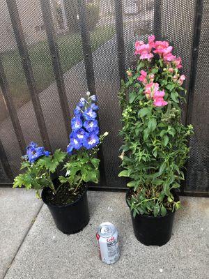 Plants/plantas for Sale in Norwalk, CA