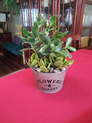 Hade plant en cubetita pequeña for Sale in South Gate, CA