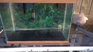20 gallon aquarium for Sale in Saint Petersburg, FL