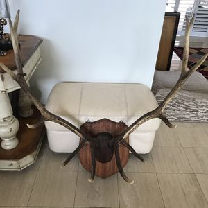 12 Point Elk Antlers Mounted On Wood Plack for Sale in Fort Lauderdale, FL