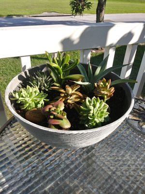 Price drop! Lg succulent bowl for Sale in Saint Cloud, FL