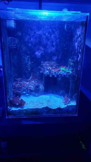 Saltwater tank for Sale in Chicago, IL
