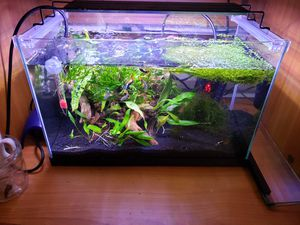 5 gallon rimless fish tank complete setup for Sale in Seattle, WA