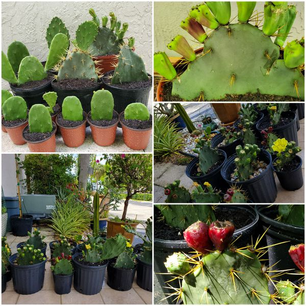 Plants Sale. Everything must go! Indoors plants. Outdoors plants