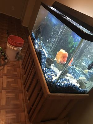 90 Gallon aquarium with stand and cabinet storage! for Sale in Wayne, MI