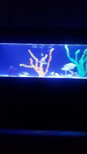 65Gallon TRUVU acrylic aquarium for Sale in San Bernardino, CA