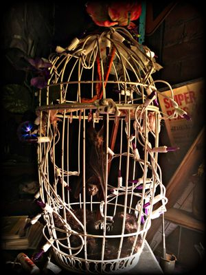 Bat in a cage filled with rage. Curiosities art for Sale in Tacoma, WA