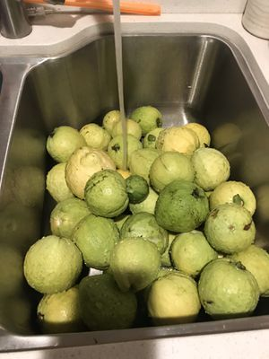 Fresh Organic Guayabas Giant Guava Guayabas Gigantes for Sale in Long Beach, CA