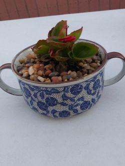 Decorative Potted Plant. $15 for Sale in La Mirada,  CA