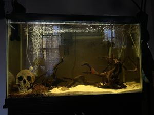 45 Gallon Fish Tank (stand+many accessories) for Sale in Sewell, NJ