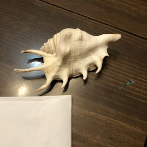 Sea Shell for Sale in Rosedale, MD