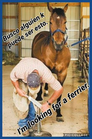 I need my horse's feet trimmed for Sale in Edinburg, TX
