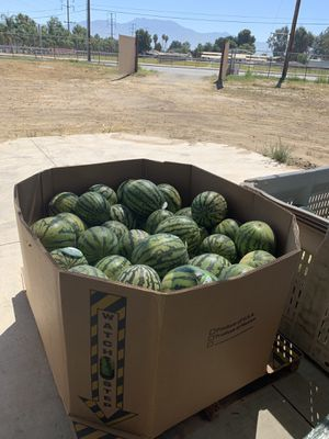 Watermelons $2 dlls We are located in C and R farms, HEMET CA for Sale in Hemet, CA