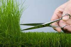 Grass trim for Sale in Hyattsville, MD