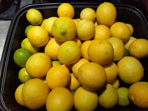 20 for $1,00 LIMONES ORGANICOS FROM MY TREE for Sale in Downey, CA