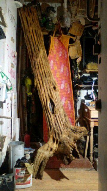 Saguaro Skeleton aprox: 7 ft plus inches