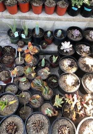 Succulents for Sale in Irwindale, CA