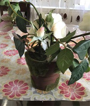 Flower for Sale in Sacramento, CA