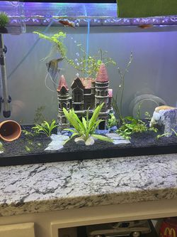 Freshwater Fish Tank Fish,Plant, Decor (need Gone ASAP) for Sale in The Bronx,  NY