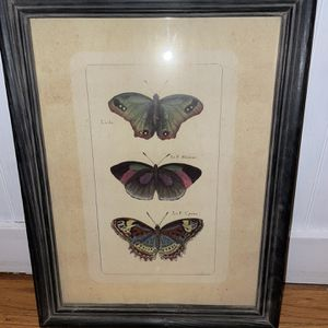 Framed Butterfly Picture for Sale in Cheshire, CT