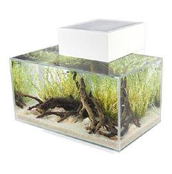 Fluval Edge 5 Gallon Aquarium Fish Tank for Sale in Livermore,  CA