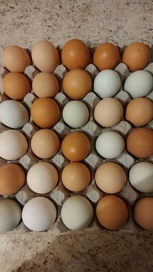 Fresh chicken eggs for Sale in Sebring, FL