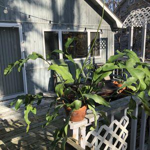 PLANT SALE for Sale in Setauket- East Setauket, NY