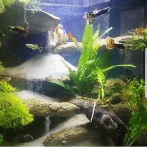 Custom 10 gal aquarium sand waterfall fish tank for Sale in Tukwila, WA