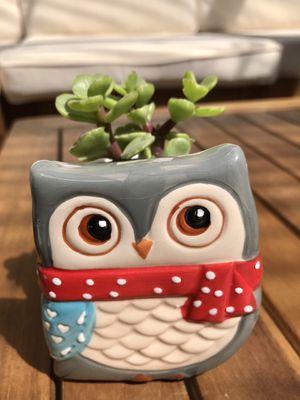 """🎁Cute present succulent in an owl pot 3.5""""x3.5"""". for Sale in Everett, WA"""