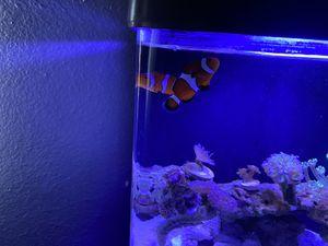 Clown fish tank for Sale in Tustin, CA