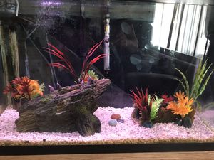 30 gallon tank with upside down catfish and 2 Pictus for Sale in Mather, CA