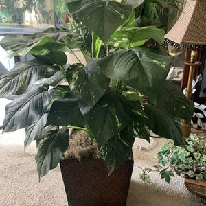 2-3 Foot Tall Beautiful Fake Tree/ Plant for Sale in North Las Vegas, NV